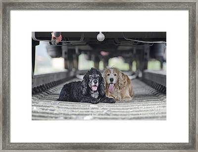 Dogs Lying Under A Train Wagon Framed Print by Mats Silvan