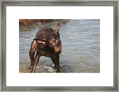 Dogs On The Beach Framed Print by Valia Bradshaw