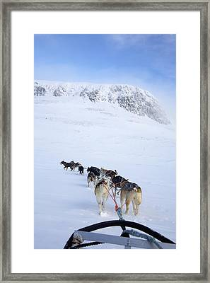 Dogs Pulling Sled Towards Framed Print