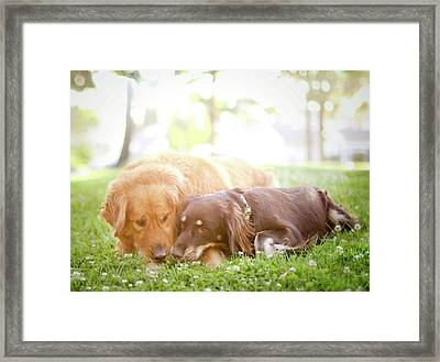 Dogs Snuggling Outside Being Cute Framed Print by Jessica Trinh