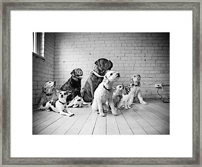 Dogs Watching At A Spot Framed Print by Sumit Mehndiratta