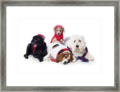 Dogs Wearing Winter Accessories Framed Print