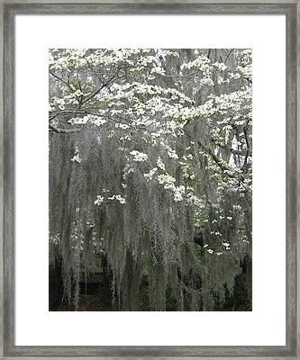 Dogwood And Spanish Moss Framed Print by Susan Richardson