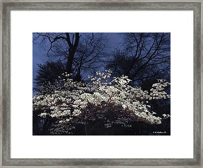 Dogwood At Night Framed Print by Brian Wallace