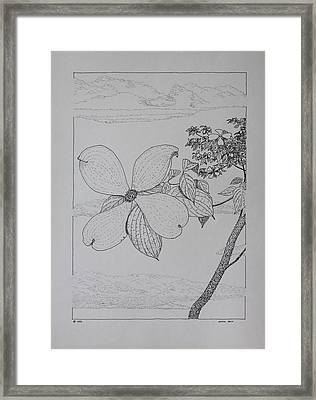 Dogwood  Framed Print by Daniel Reed