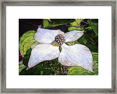 Dogwood Days Framed Print by Judi Bagwell