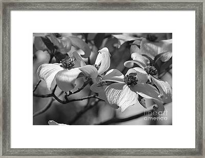 Framed Print featuring the photograph Dogwood Flowers by Tannis  Baldwin