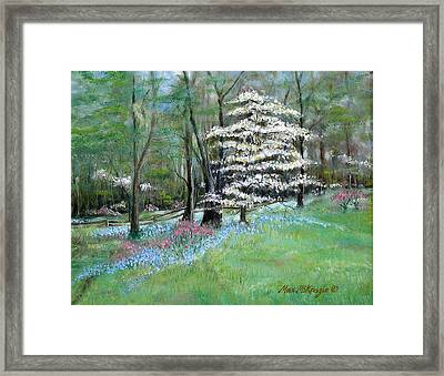 Dogwood In Springtime Framed Print by Max Mckenzie