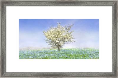 Dogwood In The Mist Framed Print by Debra and Dave Vanderlaan