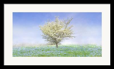 Dogwood Silhouette Framed Prints