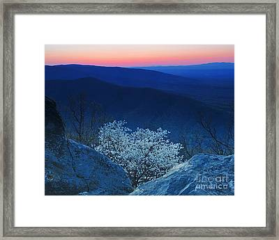 Dogwood Spring Sunset Blue Ridge Parkway Framed Print
