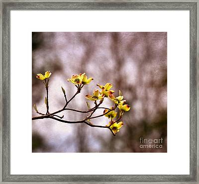 Framed Print featuring the photograph Dogwood by Tamera James