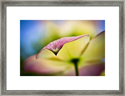Dogwood Framed Print by Toni Johnson