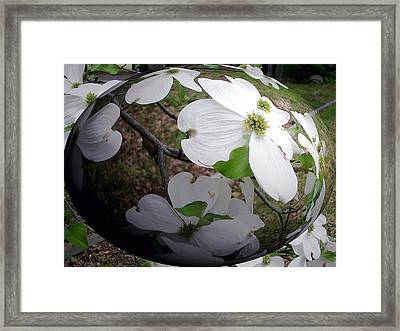 Dogwood Under Glass Framed Print