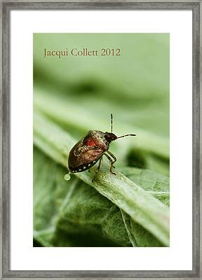 Doing What Comes Naturally Framed Print by Jacqui Collett