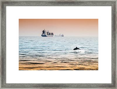 Dolphing Playing In The Sunset Framed Print by Stephen McCluskey