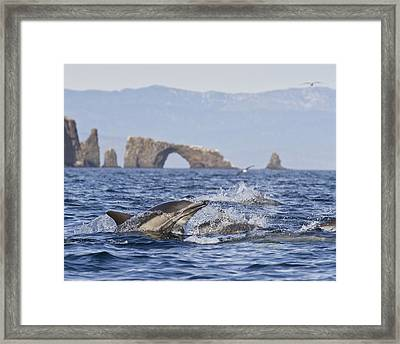 Dolphins With Arch Framed Print by Will Edwards