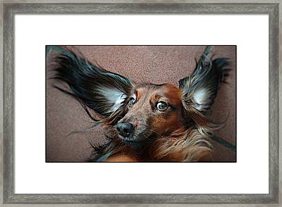 Dombo  With The Big Ears! Framed Print by Animals