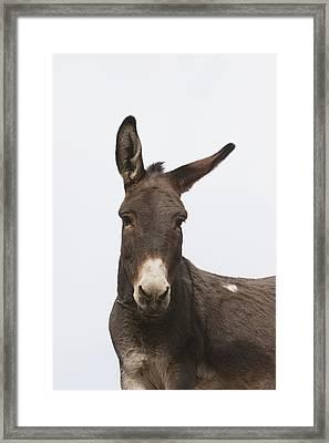 Donkey At The Hajigak Pass, Vardak Framed Print by Peter Langer
