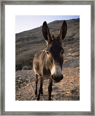 Donkey Framed Print by Bjorn Svensson