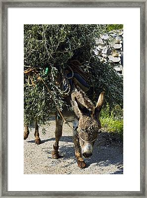 Donkey Carrying Olive Branches Framed Print