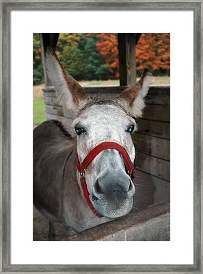 Donkey Looks Framed Print by LeeAnn McLaneGoetz McLaneGoetzStudioLLCcom