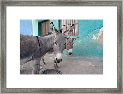 Donkeys, Harar, Ethiopia, Africa Framed Print by David DuChemin