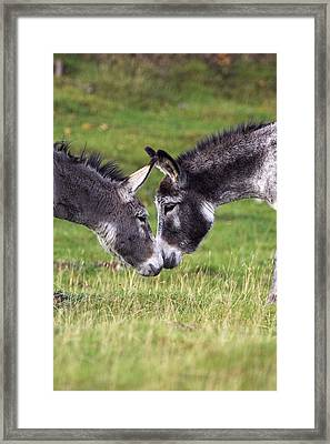 Donkeys Touching Noses Framed Print