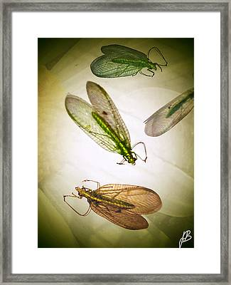 Don't Be Bugged Framed Print by Jenn Bodro