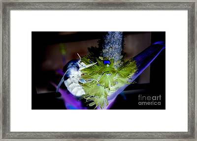 Don't Bee Blue Framed Print by Renee Trenholm