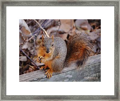Dont Even Think About It Framed Print by DiDi Higginbotham