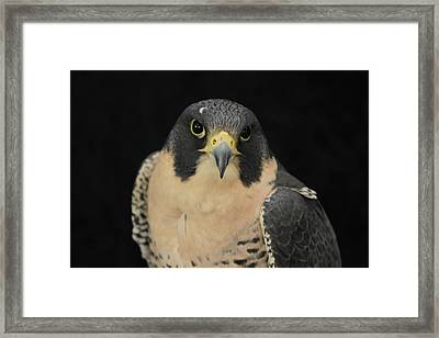 Don't Flinch... I Am Looking At You Framed Print