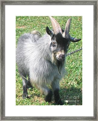 Don't Get Too Close Framed Print by Marlene Robbins