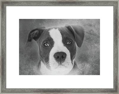 Don't Hate The Breed - Black And White Framed Print