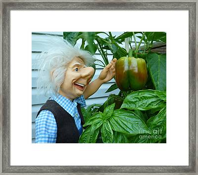 Framed Print featuring the photograph Dorf Grandpa Doll Picking Bell Peppers by Renee Trenholm