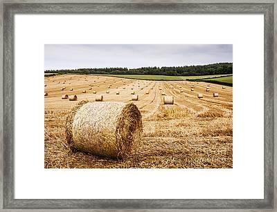 Dorset Hayfield Framed Print
