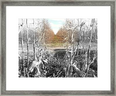 Dot Of Life Framed Print by Amanda St Germain