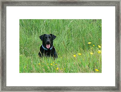 Dot Framed Print by Pamela Patch