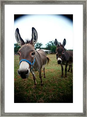 Framed Print featuring the photograph Doting Donkeys by Lon Casler Bixby