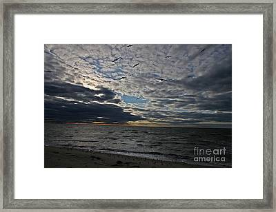 Dottie's Flight Framed Print by Scott Allison