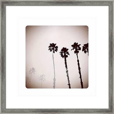 Dotty Palms Today In #calistoga Framed Print