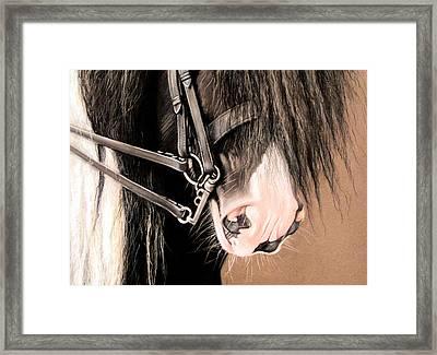 Double Bridle Framed Print by Caroline Collinson