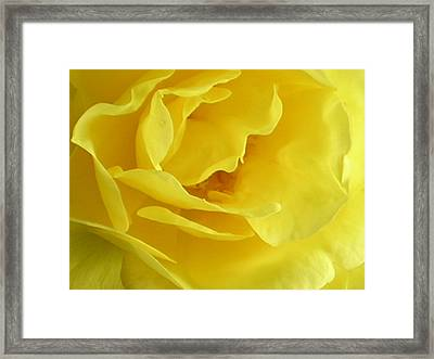 Double Daffodill Framed Print by Tina Ann Byers
