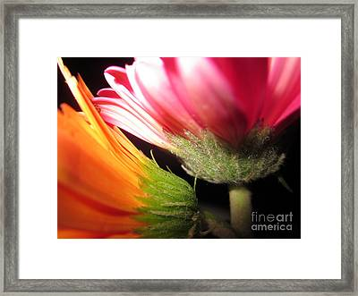 Double Delight Framed Print by Miss McLean