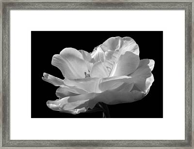 Framed Print featuring the photograph Double Late Angelique Tulip by Darleen Stry