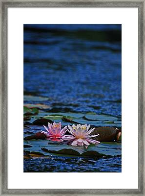 Double Lily Framed Print by Karol Livote