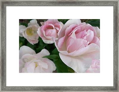 Double Pink Framed Print