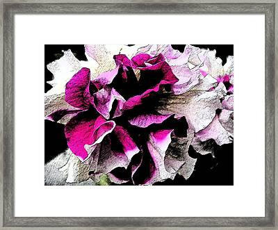 Double The Frill Framed Print by Yvonne Scott