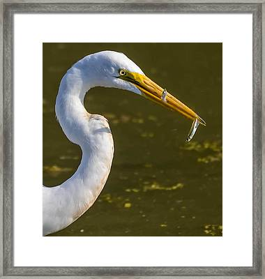 Double The Fun Framed Print by Brian Stevens