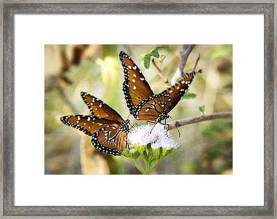 Double The Fun  Framed Print